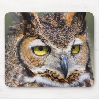 Kendall County, Texas. Great Horned Owl Mouse Pad