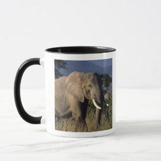 Kenya: Amboseli, male African elephant Mug