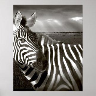 Kenya Black white of zebra and plain Poster