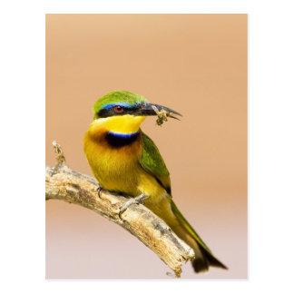 Kenya. Close-up of little bee-eater bird on limb Postcard