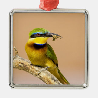 Kenya. Close-up of little bee-eater bird on limb Silver-Colored Square Decoration
