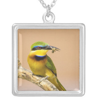 Kenya. Close-up of little bee-eater bird on limb Square Pendant Necklace