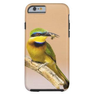 Kenya. Close-up of little bee-eater bird on limb Tough iPhone 6 Case