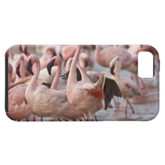 Kenya, Lake Nakuru National Park. Flamingos wade iPhone 5 Cover