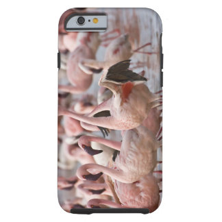 Kenya, Lake Nakuru National Park. Flamingos wade Tough iPhone 6 Case