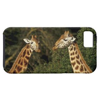 Kenya: Lake Nakuru National Park, Rothschild 2 Case For The iPhone 5