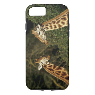 Kenya: Lake Nakuru National Park, Rothschild 2 iPhone 7 Case