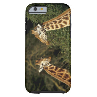 Kenya: Lake Nakuru National Park, Rothschild 2 Tough iPhone 6 Case