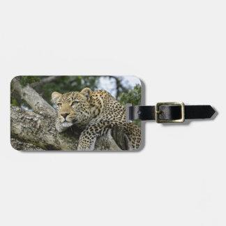 Kenya Leopard Tree Africa Safari Animal Wild Cat Luggage Tag