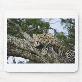 Kenya Leopard Tree Africa Safari Animal Wild Cat Mouse Pad