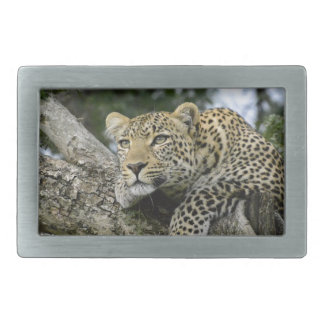 Kenya Leopard Tree Africa Safari Animal Wild Cat Rectangular Belt Buckle