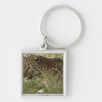 Kenya, Masai Mara Game Reserve. African Leopard 2 Keychains