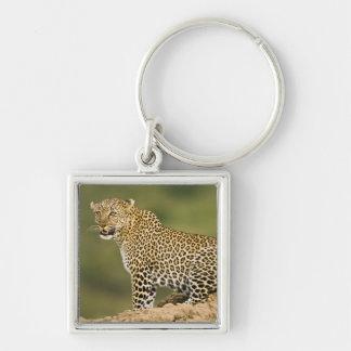 Kenya, Masai Mara Game Reserve. African Leopard Key Chains