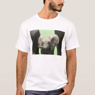 Kenya:  Masai Mara Game Reserve (also known as T-Shirt