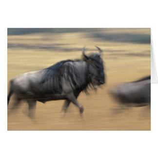 Kenya, Masai Mara Game Reserve, Blurred image Cards
