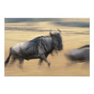Kenya, Masai Mara Game Reserve, Blurred image Photograph