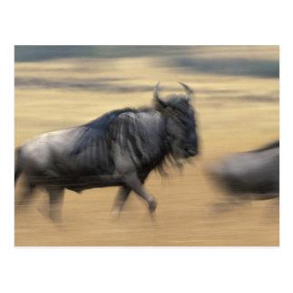 Kenya, Masai Mara Game Reserve, Blurred image Postcard