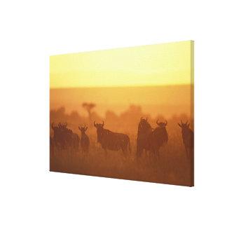 Kenya, Masai Mara Game Reserve, Herd of Gallery Wrap Canvas