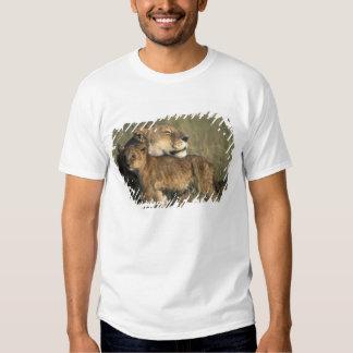 Kenya, Masai Mara Game Reserve, Lioness Tee Shirt