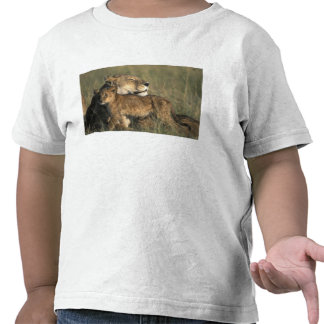 Kenya, Masai Mara Game Reserve, Lioness Shirt