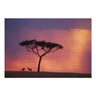 Kenya: Masai Mara National Park, Sunset. Art Photo