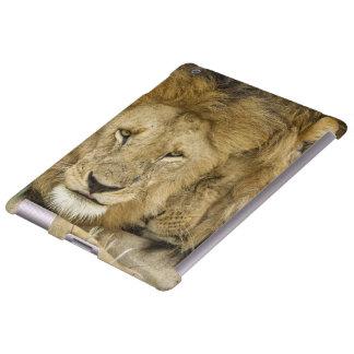 Kenya, Masai Mara. Two lions resting face to