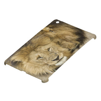 Kenya, Masai Mara. Two lions resting face to Cover For The iPad Mini