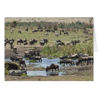 Kenya, No Water No Life Mara River Expedition, 4 Card