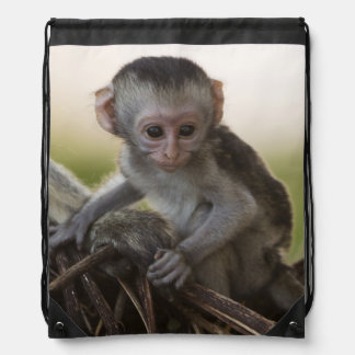 Kenya, Samburu Game Reserve. Vervet Monkey Backpack