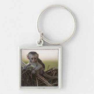 Kenya, Samburu Game Reserve. Vervet Monkey Keychains