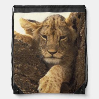 Kenya, Samburu National Game Reserve. Lion cub Backpack