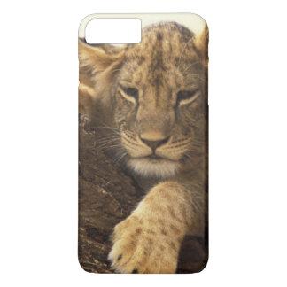 Kenya, Samburu National Game Reserve. Lion cub iPhone 7 Plus Case