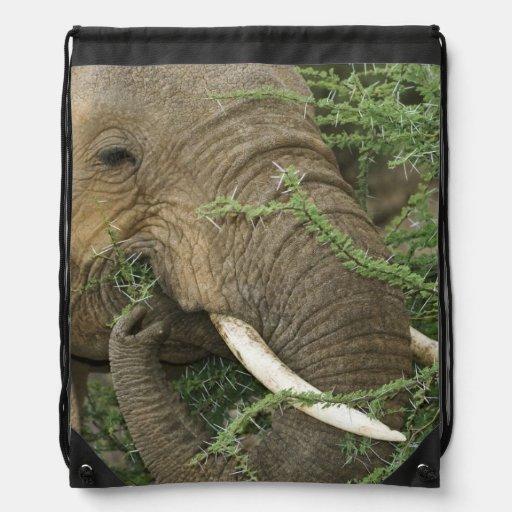 Kenya, Samburu National Reserve. Close-up of Drawstring Bags