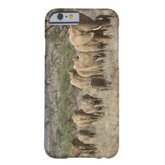 Kenya, Samburu National Reserve. Elephants iPhone 6 Case