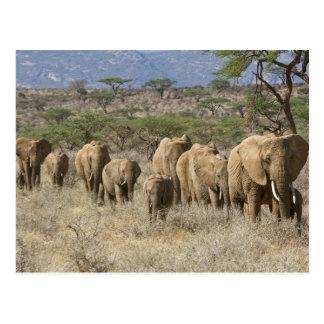 Kenya, Samburu National Reserve. Elephants Postcard