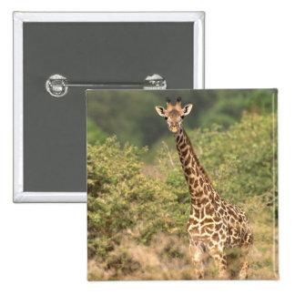 Kenyan giraffe 15 cm square badge