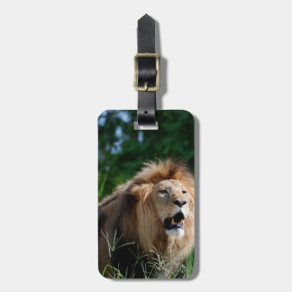 Kenyan Lion Luggage Tag