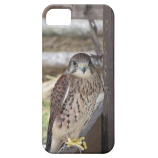 Kestrel perched on a fence post case for the iPhone 5