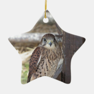 Kestrel perched on a fence post ceramic ornament