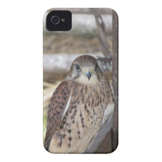 Kestrel perched on a fence post iPhone 4 Case-Mate cases