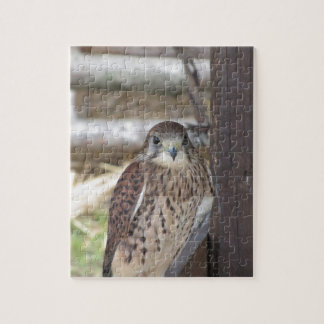 Kestrel perched on a fence post jigsaw puzzle