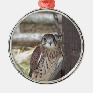 Kestrel perched on a fence post metal ornament
