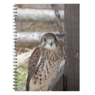 Kestrel perched on a fence post notebooks