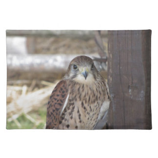 Kestrel perched on a fence post placemat