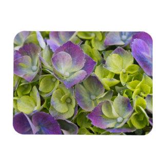 Keukenhof Garden Hydrangea Rectangular Photo Magnet