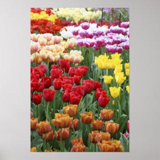 Keukenhof Gardens, Holland, specializes in 2 Poster