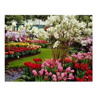 Keukenhof gardens in Lisse, south of Amster Postcard