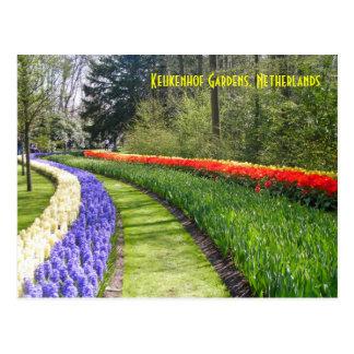 Keukenhof Gardens, Netherlands Postcard