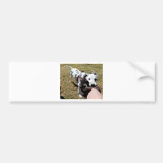 Kevin the Dalmatian Bumper Sticker