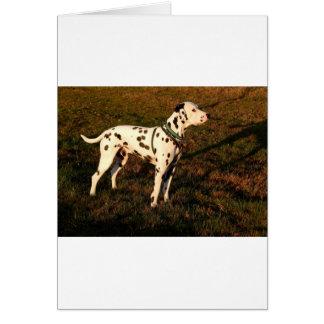 Kevin the Dalmatian Card